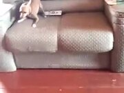 Dog So Fast That It Almost Teleports