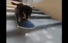 A Skater Pup