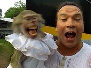 Humans Are Descendants Of Monkeys After All