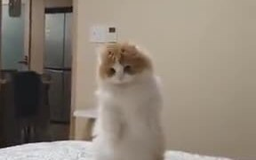 Cat So Confused That It Stood On Two Legs