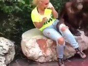 This Orangutan Knows How To Get Ladies