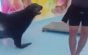 Never Knew Seals Are So Intelligent