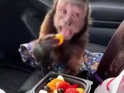 """The Monkey Be Like, """"Can I Have Some?"""""""
