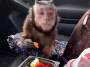 "The Monkey Be Like, ""Can I Have Some?"""