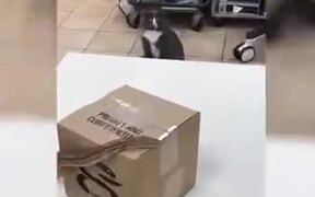 Duke Catto Gets Ready To Fight The Enemy