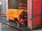 A Dog Washer