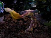 Fantastic Fungi Trailer