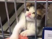 Hope This Kitten Gets Adopted In The End