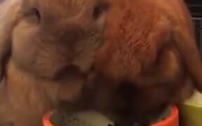 Bugs Bunny Chewing On Food