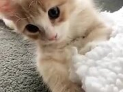 Brighten Up Your Day A Little, With This Kitten