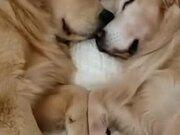 Two Four-Legged Sweethearts Sleeping