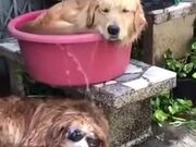 These Dogs Are Really Beating The Heat