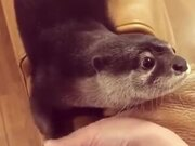 This Otter Is OTTERly Cute