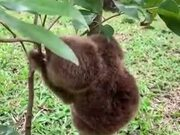 Who Knew Sloths Are So Adorable