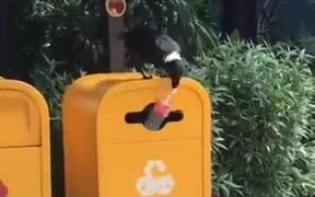 Birds Are Smarter Than Humans