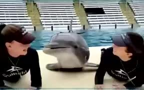 Dolphin Gets More Attention Than You