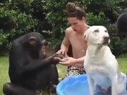 That's Some Premium Chimp Dog Wash
