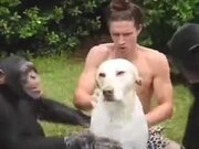 That's Some Premium Chimp Dog Wash