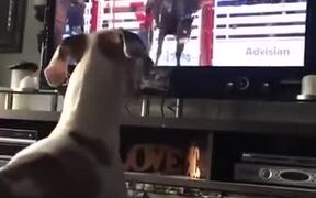 Dog Wants To Be A Bucking Rodeo Horse