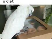 Doughnuts & Parrot