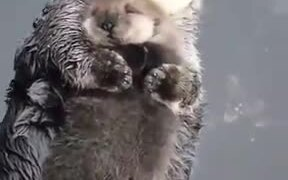 Otters Are As Affectionate As Humans