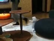 This Cat Did Take Some Dance Lessons