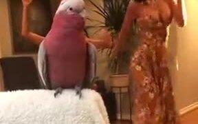 That Bird Has Some Nice Dancing Skills