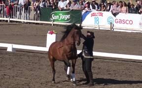 Spanish Horse Show