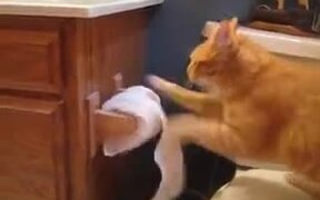 Why Cats Shouldn't Be Anywhere Near Toilets