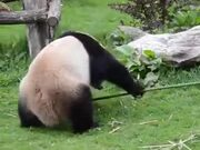 Here Is The Real-Life Kung-Fu Panda