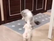 Is The Cat Teaching The Puppy Dance Moves?