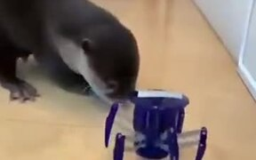 Cute Otter Scared By A Toy