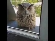 So Hedwig Is Real After All