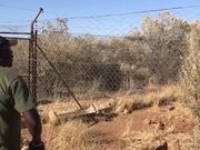 Caracals Can Make Some Seriously High Jumps