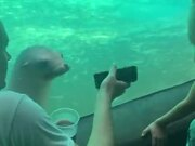 Seal's Really Interested In The Phone