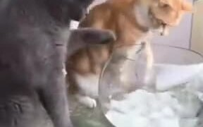 The Civil Cat Vs The Conventional Cat