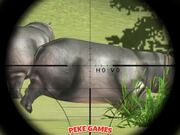 Classical Hippo Hunting Walkthrough