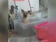 Dog Having A Nice Time Bathing