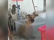 Dog Having A Nice Time Bathing
