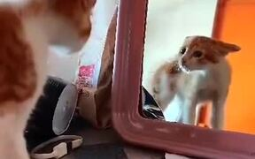 Cat Got Mad At Its Own Reflection