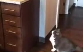 Will The Cat Make It? Will It Make It? Oh, Well