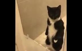 Cat Finally Figured That It's Getting Fat
