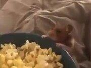 Behold The Tiny Popcorn Thief