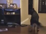 Dog Playing With The Baby