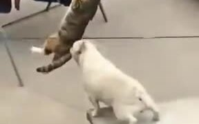 Neither Cat Nor Dog Will Quit