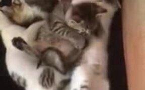 What's Better Than One Cute Kitten? Six!