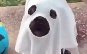 The Cutest Ghost Ever