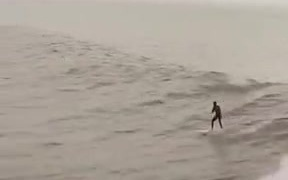 Just Catching Some Waves With The Aquatic Friends