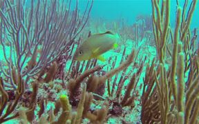 Fish in Coral Reef