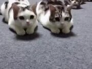 Two Cats In Sync, The Third? Nope